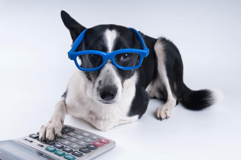 Dennis Fritz's Under-Utilized Pet Tax Deductions